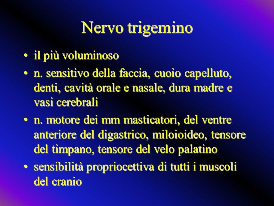 Nervo trigemino il più voluminosoil più voluminoso n. sensitivo della faccia, cuoio capelluto, denti, cavità orale e nasale, dura madre e vasi cerebra