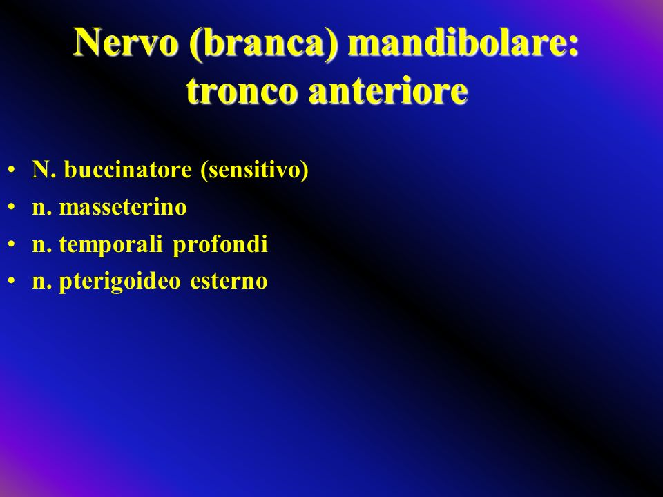 Nervo (branca) mandibolare: tronco anteriore N. buccinatore (sensitivo) n. masseterino n. temporali profondi n. pterigoideo esterno