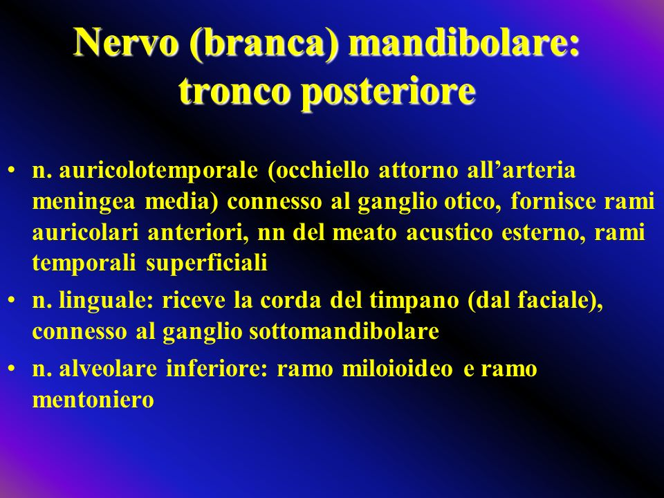 Nervo (branca) mandibolare: tronco posteriore n. auricolotemporale (occhiello attorno allarteria meningea media) connesso al ganglio otico, fornisce r