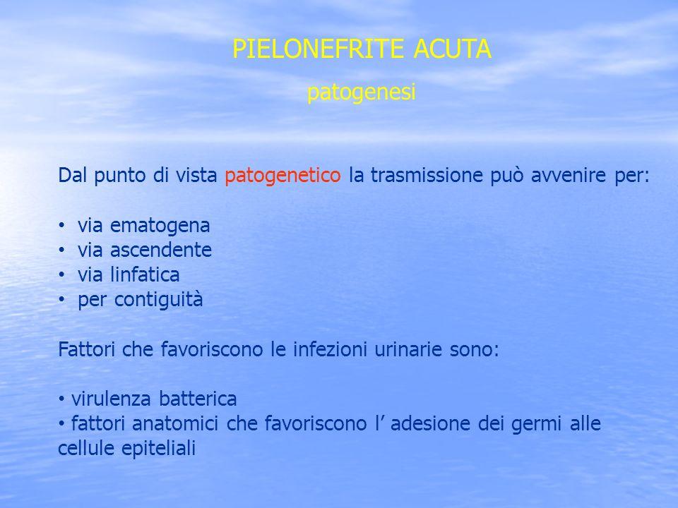 PIELONEFRITE ACUTA patogenesi Dal punto di vista patogenetico la trasmissione può avvenire per: via ematogena via ascendente via linfatica per contigu