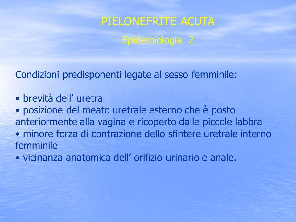 PIELONEFRITE ACUTA Epidemiologia 2 Condizioni predisponenti legate al sesso femminile: brevità dell uretra posizione del meato uretrale esterno che è