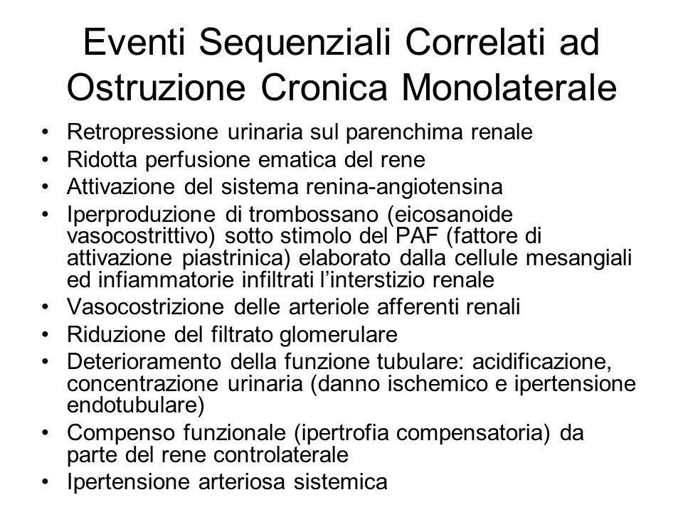 Eventi Sequenziali Correlati ad Ostruzione Cronica Monolaterale Retropressione urinaria sul parenchima renale Ridotta perfusione ematica del rene Atti