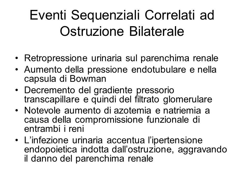 Eventi Sequenziali Correlati ad Ostruzione Bilaterale Retropressione urinaria sul parenchima renale Aumento della pressione endotubulare e nella capsu