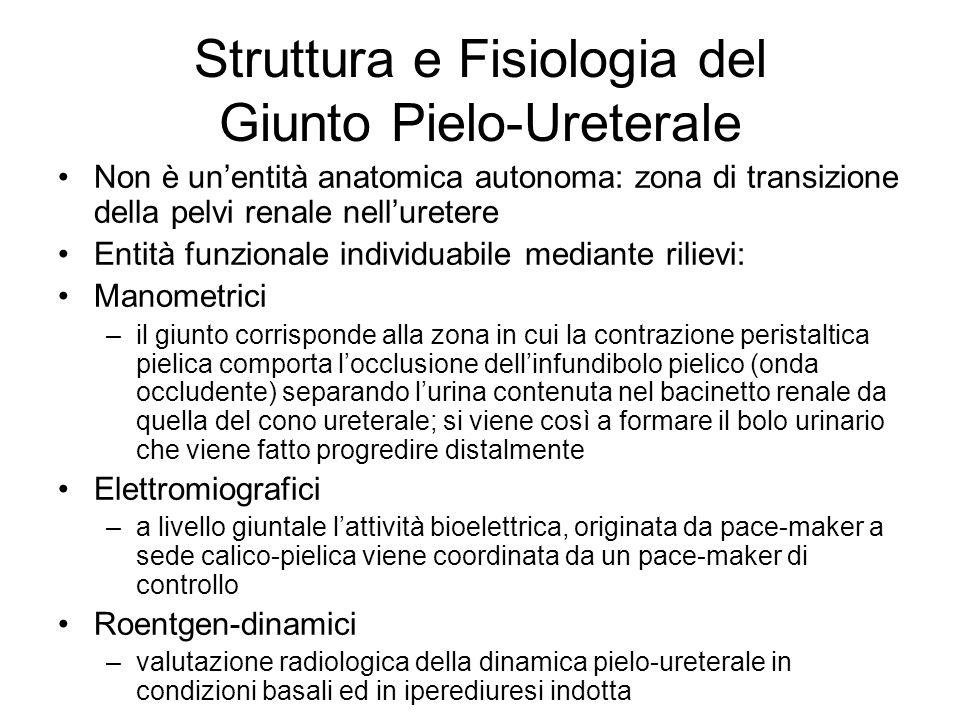 Struttura e Fisiologia del Giunto Pielo-Ureterale Non è unentità anatomica autonoma: zona di transizione della pelvi renale nelluretere Entità funzion