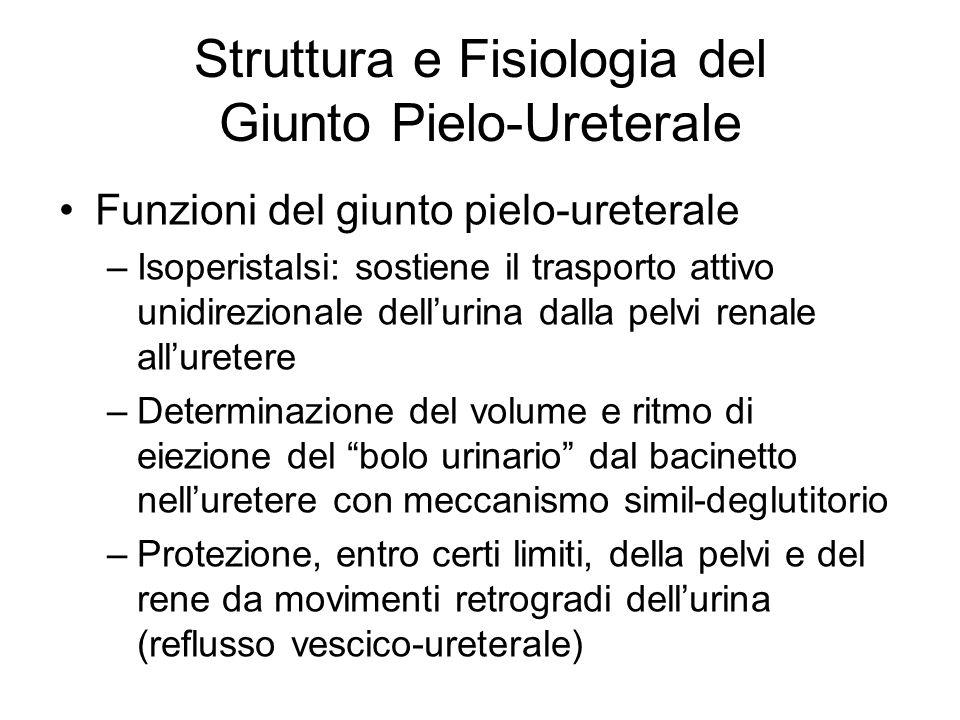 Struttura e Fisiologia del Giunto Pielo-Ureterale Funzioni del giunto pielo-ureterale –Isoperistalsi: sostiene il trasporto attivo unidirezionale dell