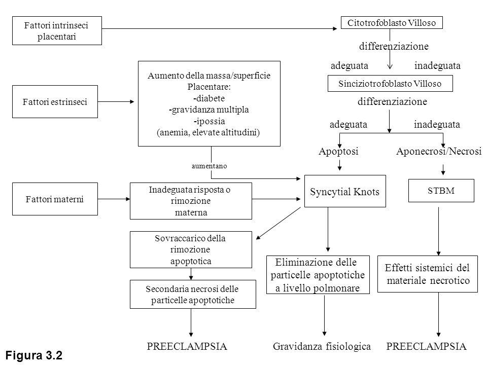Fattori intrinseci placentari Citotrofoblasto Villoso differenziazione inadeguataadeguata Aponecrosi/Necrosi STBM Effetti sistemici del materiale necr