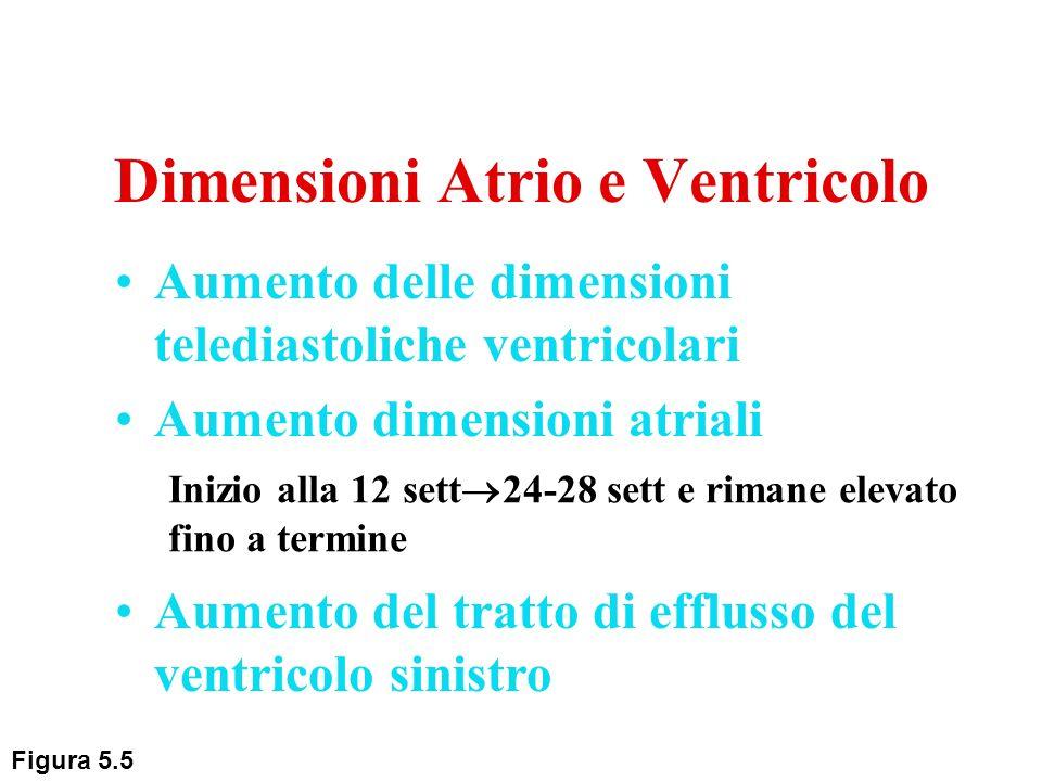 Aumento delle dimensioni telediastoliche ventricolari Aumento dimensioni atriali Inizio alla 12 sett 24-28 sett e rimane elevato fino a termine Aument