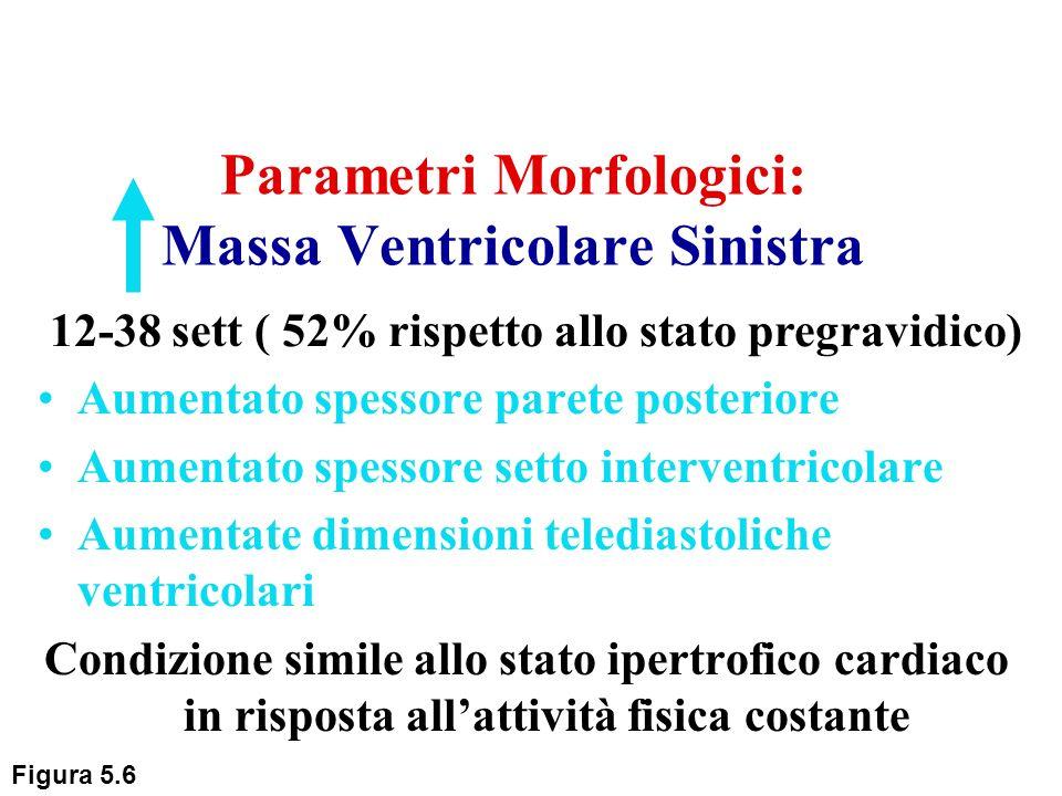 Parametri Morfologici: Massa Ventricolare Sinistra Aumentato spessore parete posteriore Aumentato spessore setto interventricolare Aumentate dimension