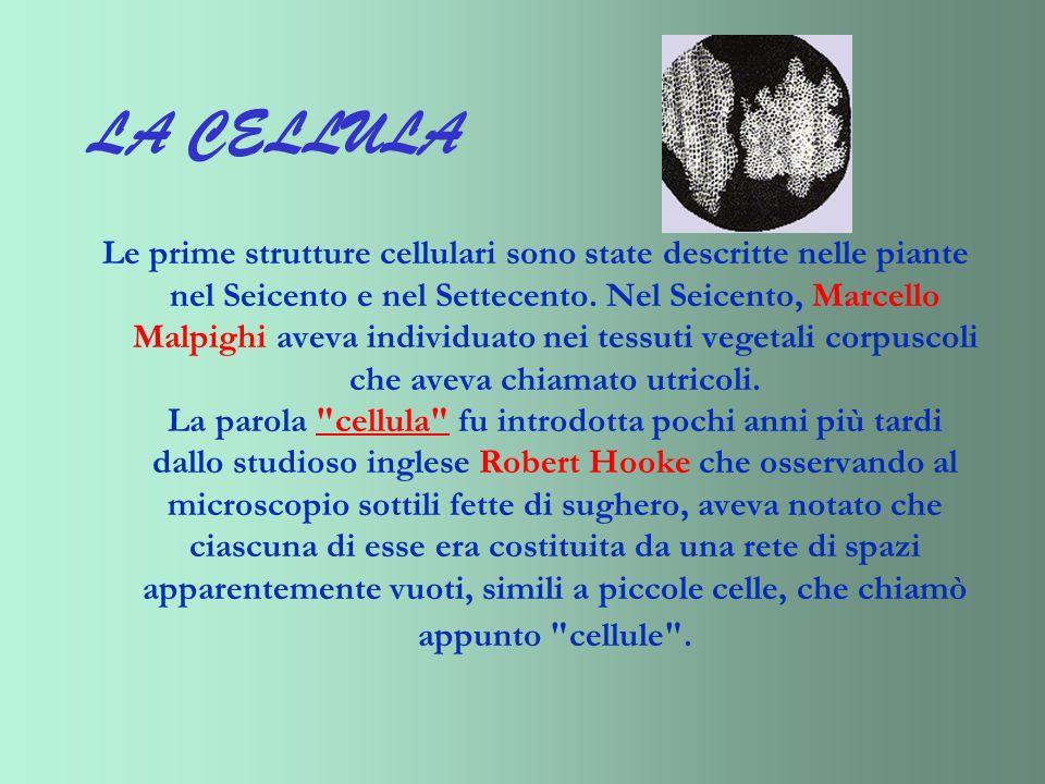 LA CELLULA Le prime strutture cellulari sono state descritte nelle piante nel Seicento e nel Settecento. Nel Seicento, Marcello Malpighi aveva individ