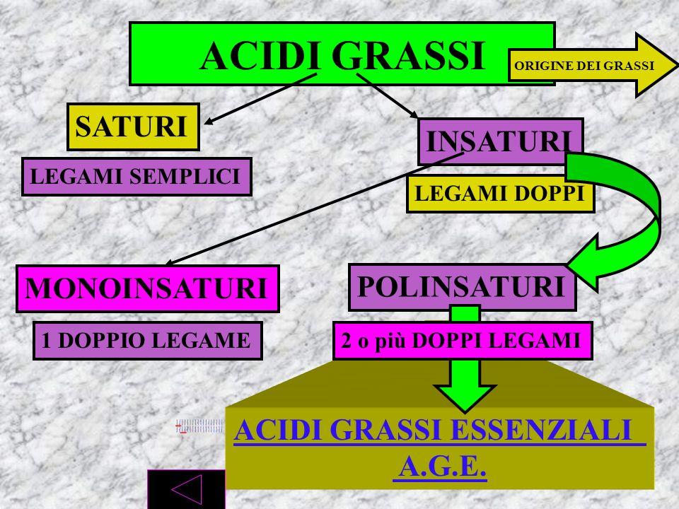 CH 2 -OH + acido grasso 1 CH -OH + acido grasso 2 CH 2 -OH + acido grasso 3 GLICEROLO + 3 ACIDI GRASSIACIDI GRASSI TRIGLICERIDI ALCOL CH 3 -CH 2 …..-C