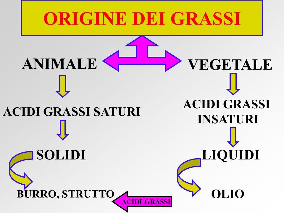 ACIDO LINOLENICO omega-3 OLIO DI SOIA SARDE SALMONE ACIDI GRASSI ESSENZIALI NON SINTETIZZABILI DAL NOSTRO ORGANISMO AMMINOACIDI POLINSATURI ACIDO LINO