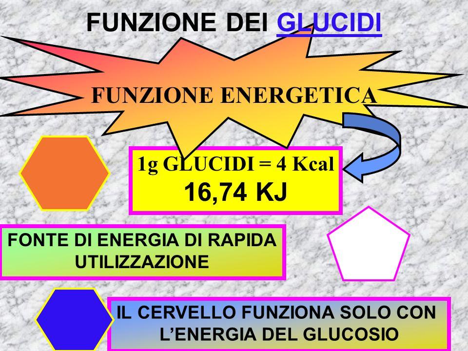 POLISACCARIDI più di 1000 molecole di glucosio Uva sangue GLUCOSIO Frutta miele FRUTTOSIO Combinato nel latte GALATTOSIO MONOSACCARIDI 1 molecola Zucc
