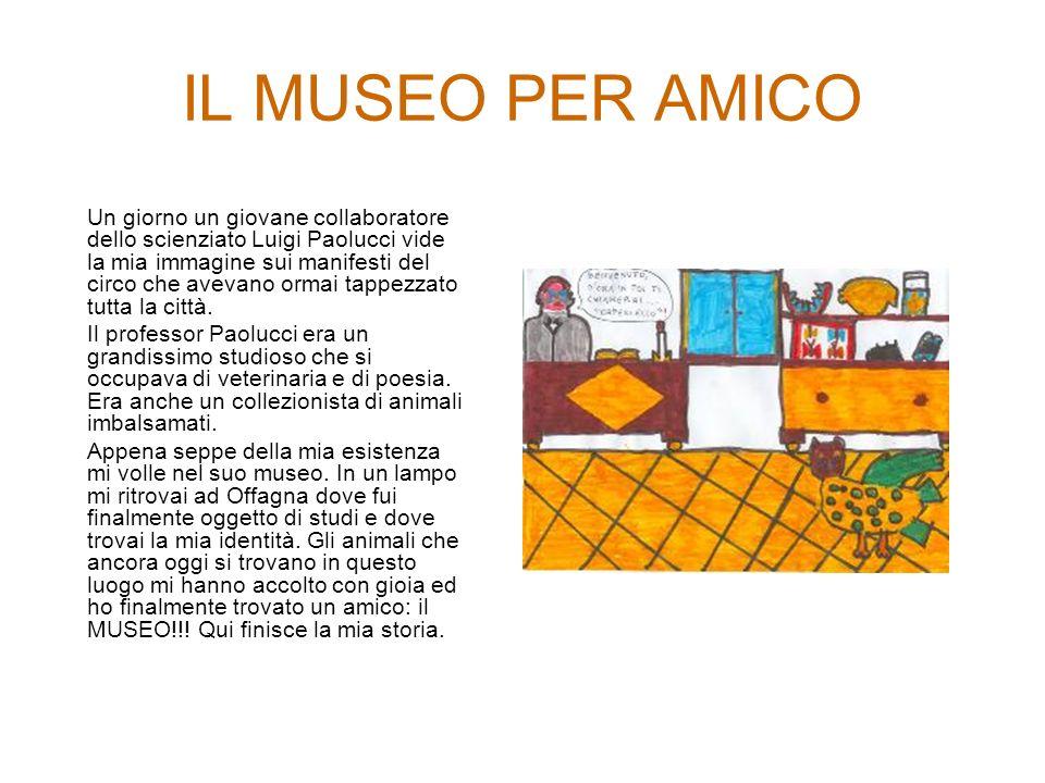 IL MUSEO PER AMICO Un giorno un giovane collaboratore dello scienziato Luigi Paolucci vide la mia immagine sui manifesti del circo che avevano ormai tappezzato tutta la città.