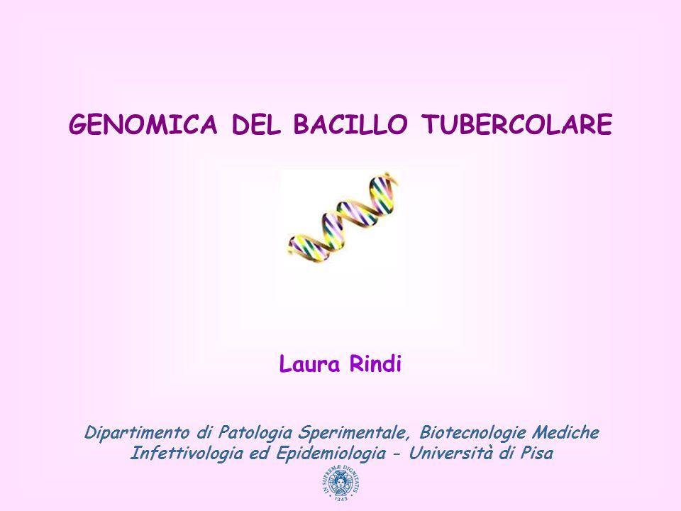 GENOMICA DEL BACILLO TUBERCOLARE Laura Rindi Dipartimento di Patologia Sperimentale, Biotecnologie Mediche Infettivologia ed Epidemiologia - Universit