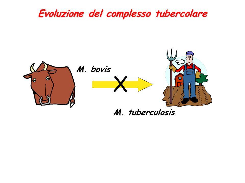 Evoluzione del complesso tubercolare M. bovis M. tuberculosis X