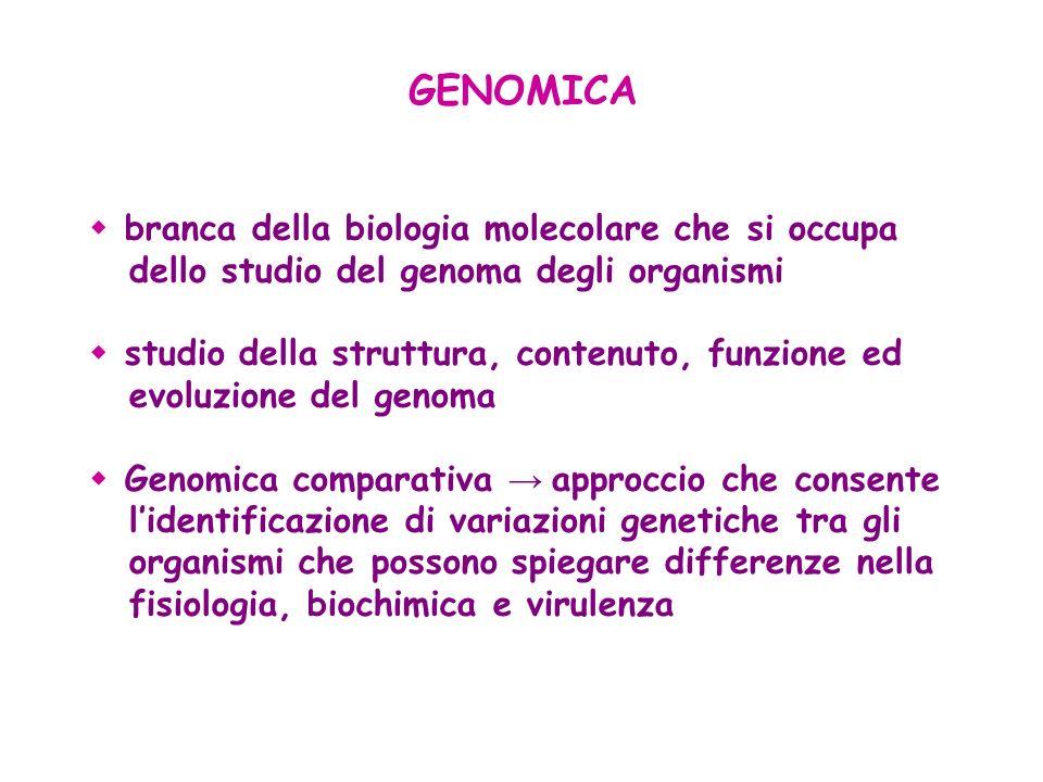 branca della biologia molecolare che si occupa dello studio del genoma degli organismi studio della struttura, contenuto, funzione ed evoluzione del g