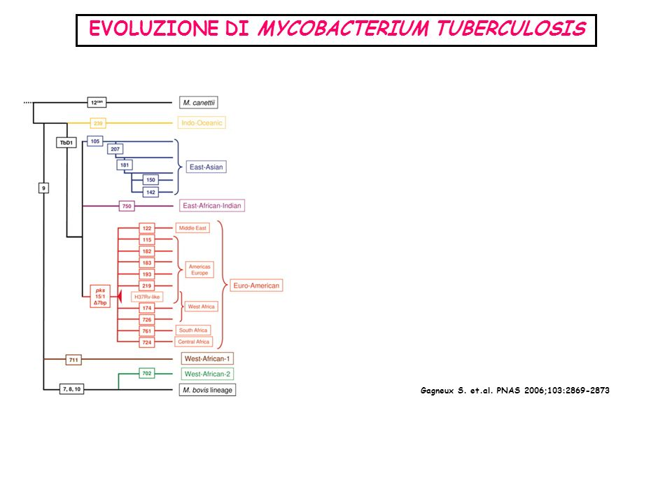 EVOLUZIONE DI MYCOBACTERIUM TUBERCULOSIS Gagneux S. et.al. PNAS 2006;103:2869-2873