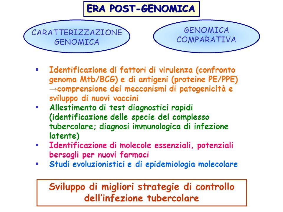 ERA POST-GENOMICA CARATTERIZZAZIONE GENOMICA GENOMICA COMPARATIVA Identificazione di fattori di virulenza (confronto genoma Mtb/BCG) e di antigeni (pr