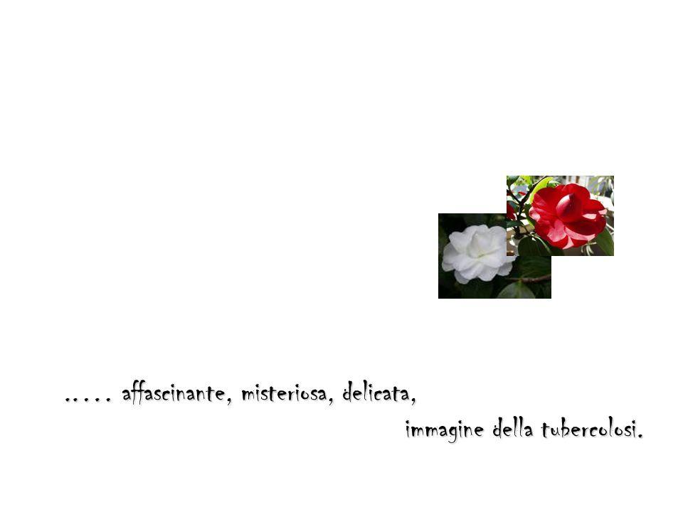 ..… affascinante, misteriosa, delicata, immagine della tubercolosi.