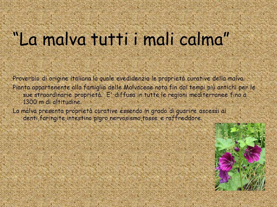 La malva tutti i mali calma Proverbio di origine italiana la quale evedidenzia le proprietà curative della malva. Pianta appartenente alla famiglia de