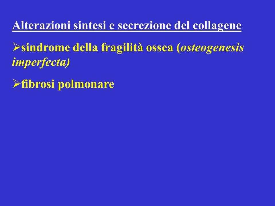Alterazioni sintesi e secrezione del collagene sindrome della fragilità ossea (osteogenesis imperfecta) fibrosi polmonare
