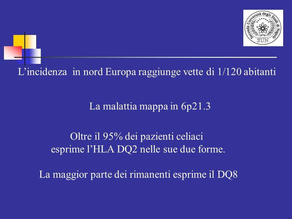 Oltre il 95% dei pazienti celiaci esprime lHLA DQ2 nelle sue due forme. La maggior parte dei rimanenti esprime il DQ8 Lincidenza in nord Europa raggiu