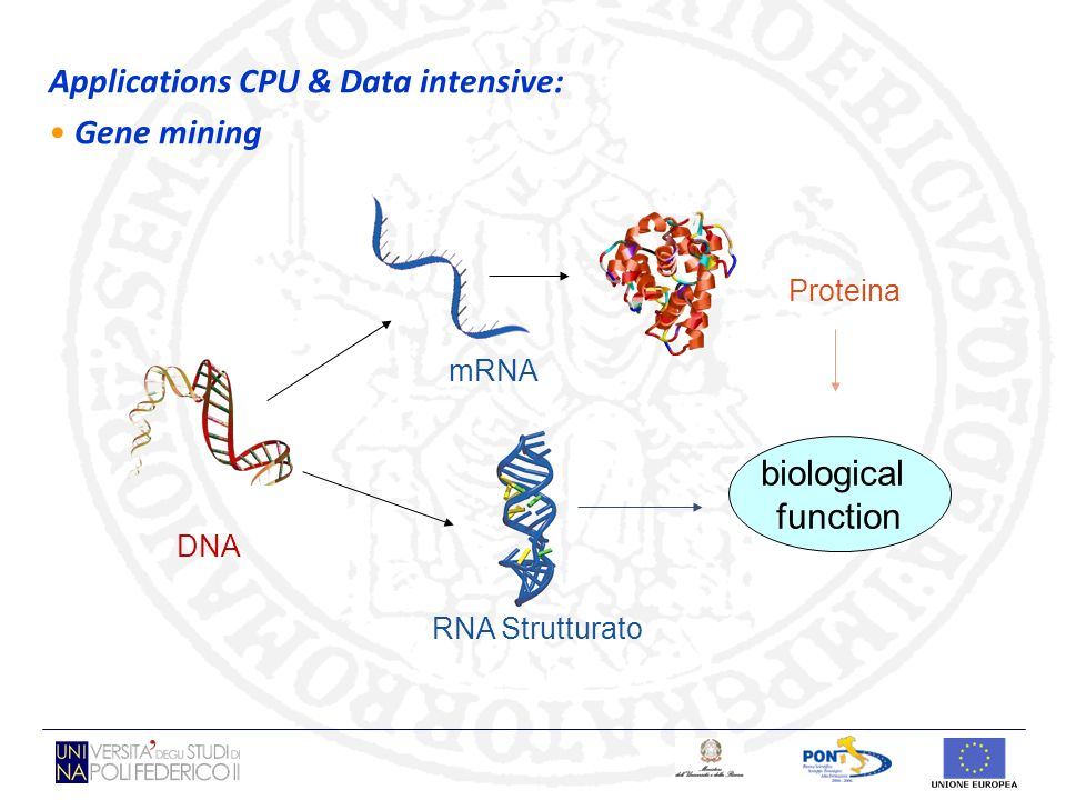 DNA Proteina RNA Strutturato mRNA biological function Applications CPU & Data intensive: Gene mining
