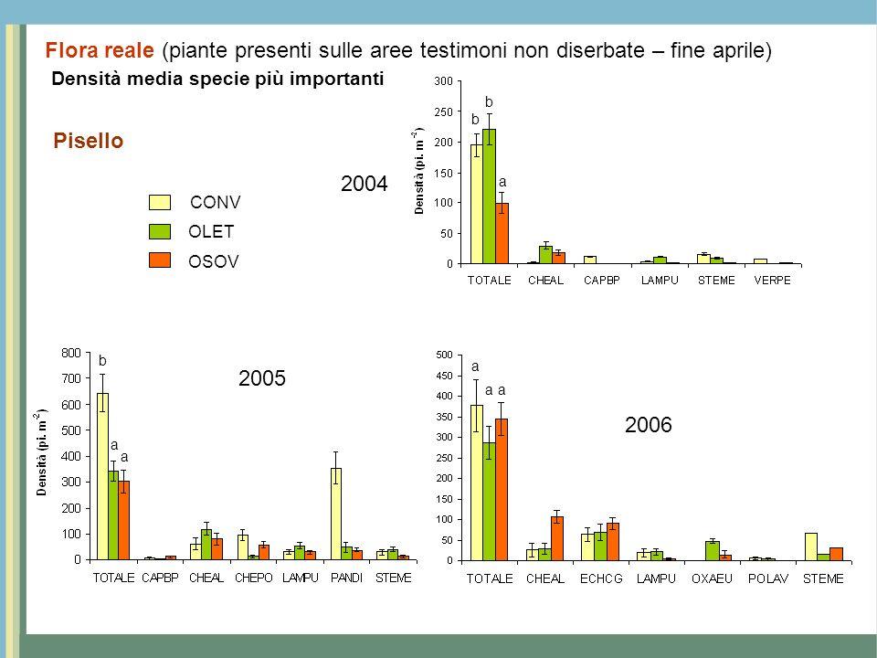 Densità media specie più importanti Pisello Flora reale (piante presenti sulle aree testimoni non diserbate – fine aprile) CONV OSOV OLET 2004 2005 20
