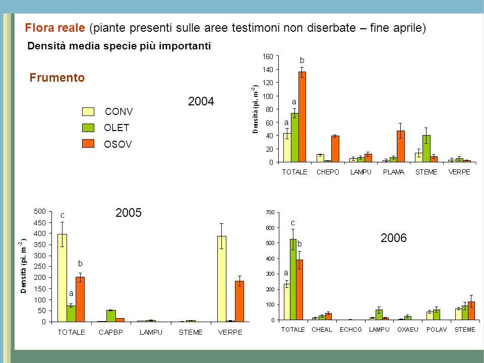Densità media specie più importanti Frumento 2004 Flora reale (piante presenti sulle aree testimoni non diserbate – fine aprile) 2006 2005 CONV OSOV O