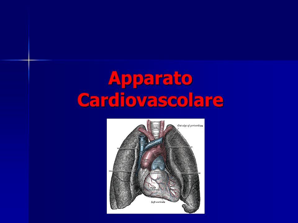 Iapparato cardiovascolare è un sistema chiuso
