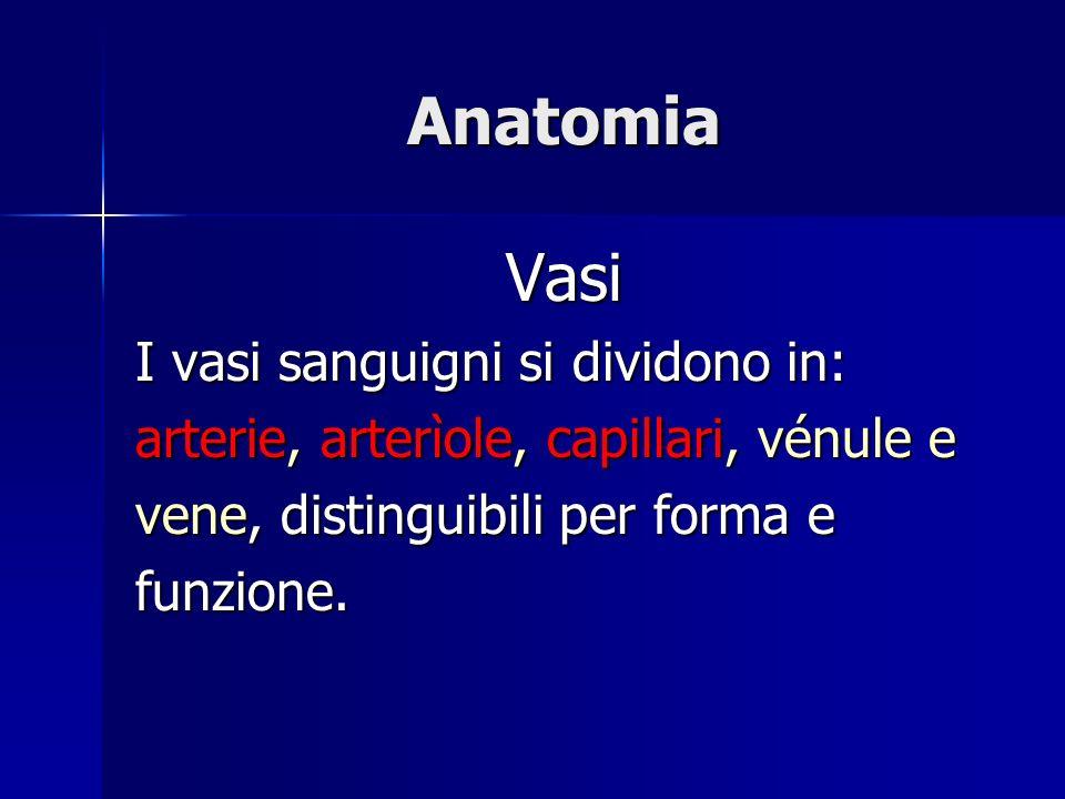 Anatomia Vasi I vasi sanguigni si dividono in: arterie, arterìole, capillari, vénule e vene, distinguibili per forma e funzione.