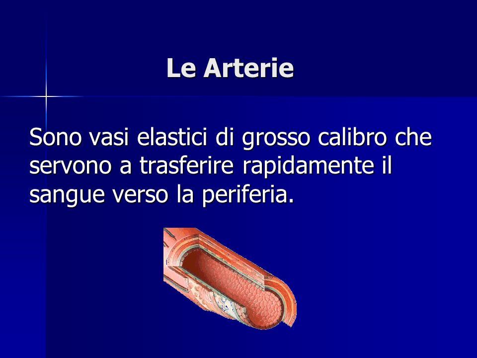 Sono vasi elastici di grosso calibro che servono a trasferire rapidamente il sangue verso la periferia. Le Arterie