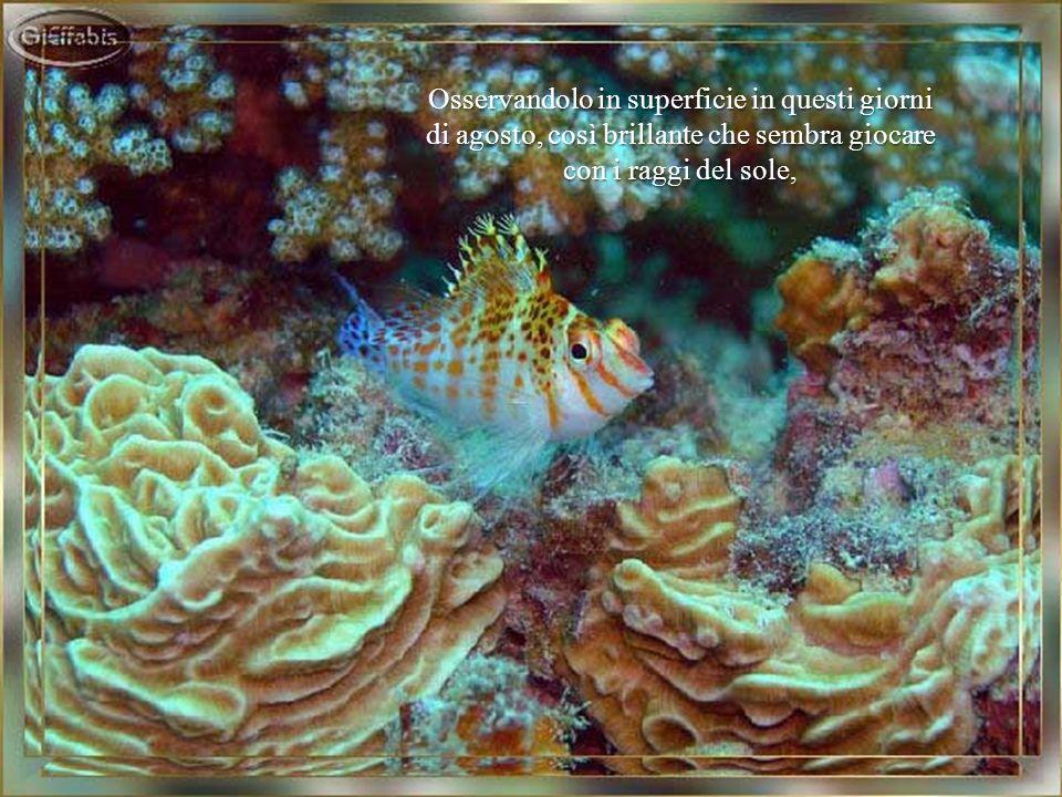 Non cè creatura al mondo più tranquilla, irrequieta, vicina o sterminata: il mare sembra riassumere in sè tutto e il suo contrario.
