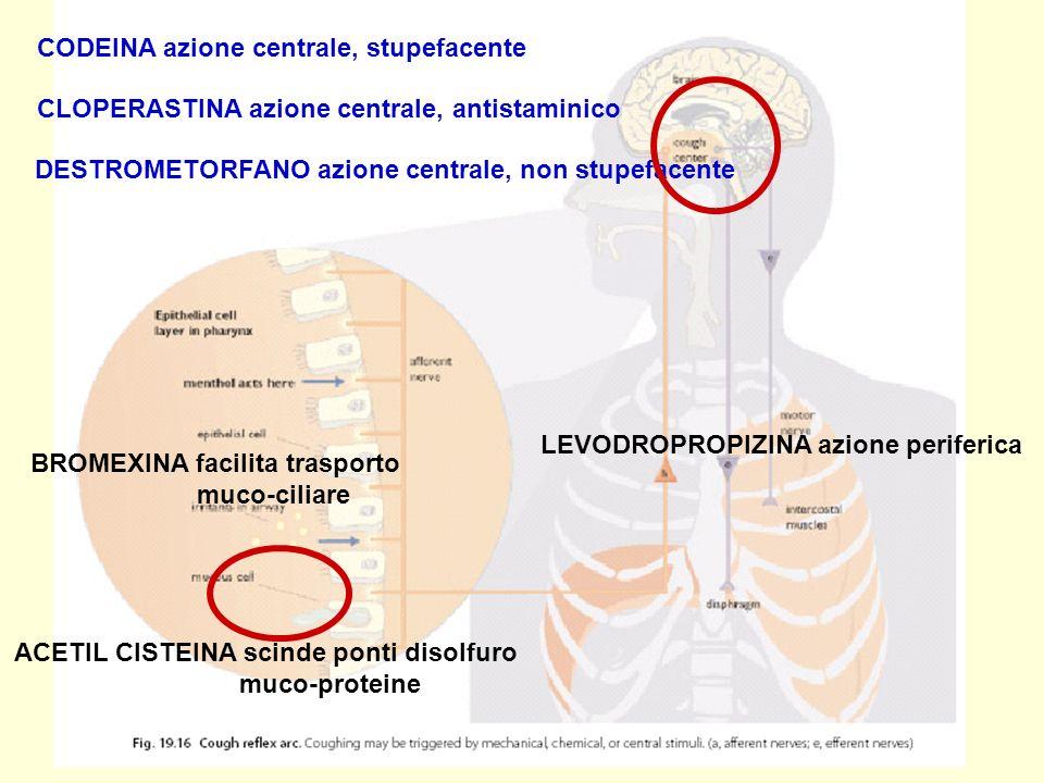 CODEINA azione centrale, stupefacente CLOPERASTINA azione centrale, antistaminico DESTROMETORFANO azione centrale, non stupefacente LEVODROPROPIZINA azione periferica BROMEXINA facilita trasporto muco-ciliare ACETIL CISTEINA scinde ponti disolfuro muco-proteine