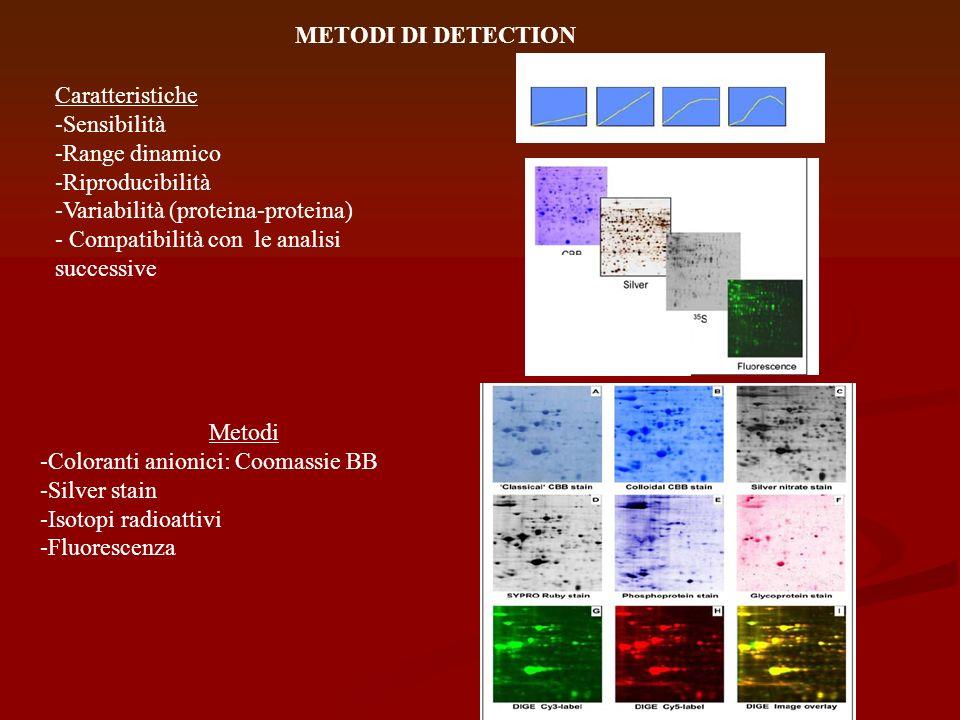 METODI DI DETECTION Caratteristiche -Sensibilità -Range dinamico -Riproducibilità -Variabilità (proteina-proteina) - Compatibilità con le analisi succ