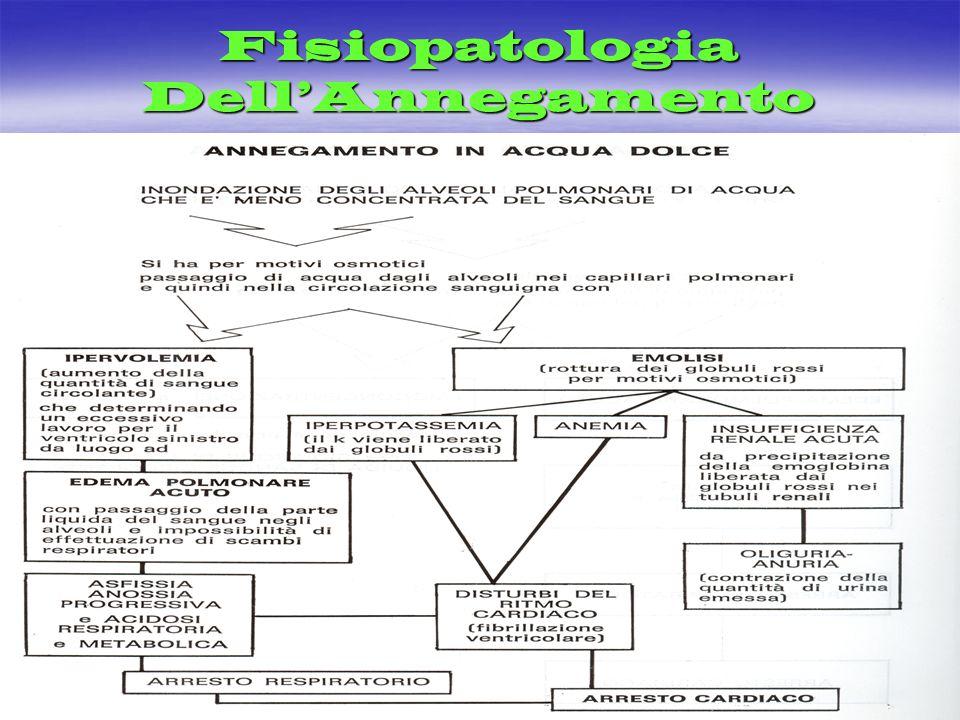 Fisiopatologia DellAnnegamento
