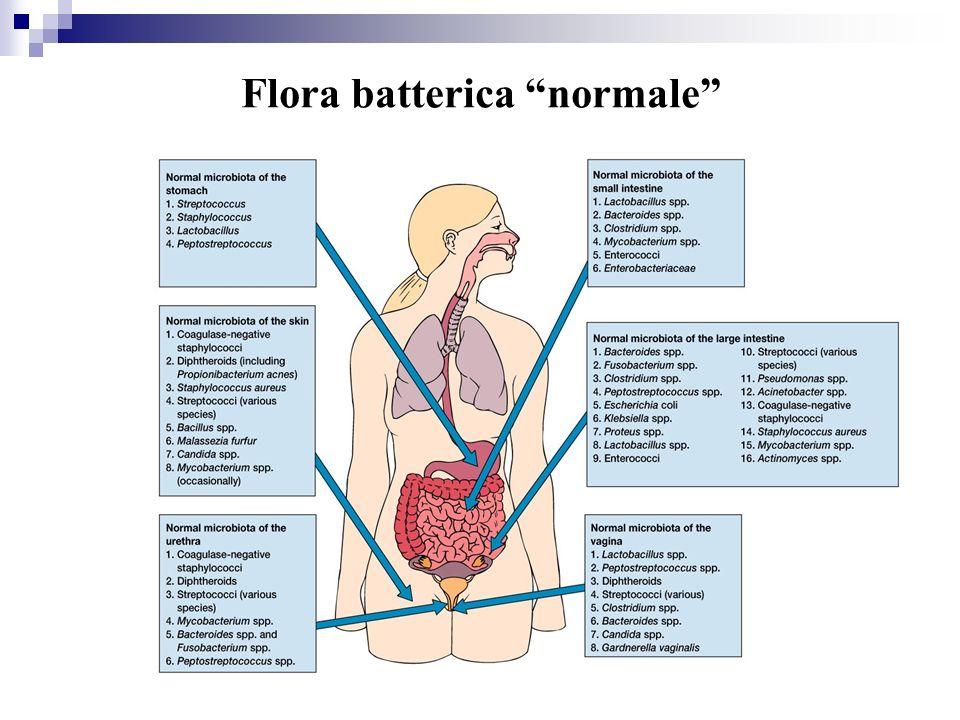 Flora batterica normale