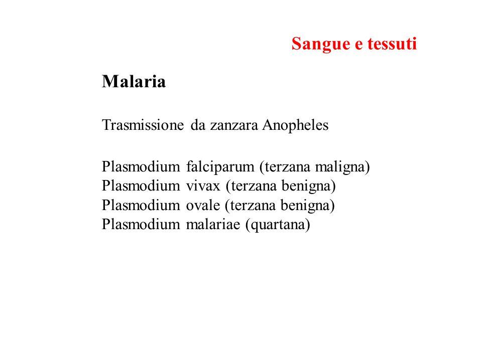 Malaria Trasmissione da zanzara Anopheles Plasmodium falciparum (terzana maligna) Plasmodium vivax (terzana benigna) Plasmodium ovale (terzana benigna