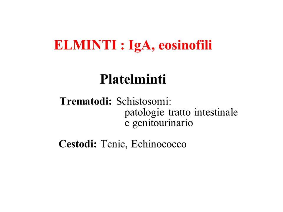 ELMINTI : IgA, eosinofili Platelminti Trematodi: Schistosomi: patologie tratto intestinale e genitourinario Cestodi: Tenie, Echinococco
