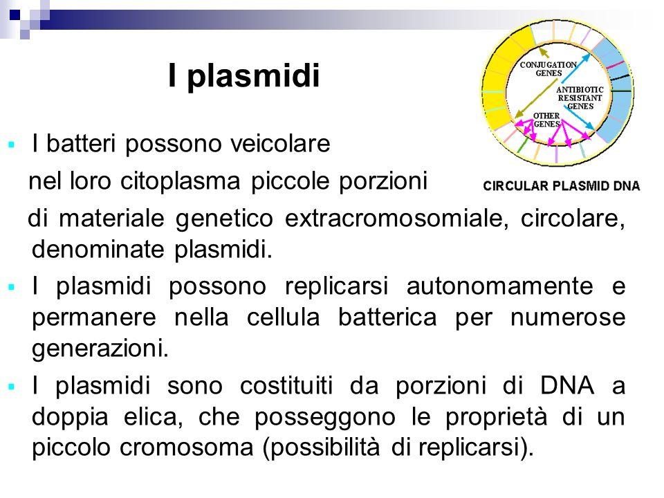I plasmidi I batteri possono veicolare nel loro citoplasma piccole porzioni di materiale genetico extracromosomiale, circolare, denominate plasmidi. I