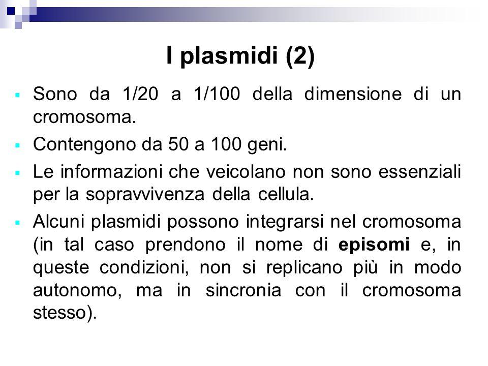 I plasmidi (2) Sono da 1/20 a 1/100 della dimensione di un cromosoma. Contengono da 50 a 100 geni. Le informazioni che veicolano non sono essenziali p