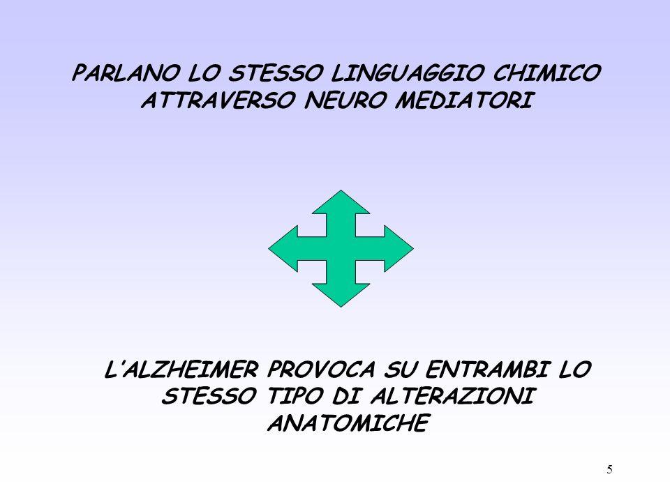 5 PARLANO LO STESSO LINGUAGGIO CHIMICO ATTRAVERSO NEURO MEDIATORI LALZHEIMER PROVOCA SU ENTRAMBI LO STESSO TIPO DI ALTERAZIONI ANATOMICHE