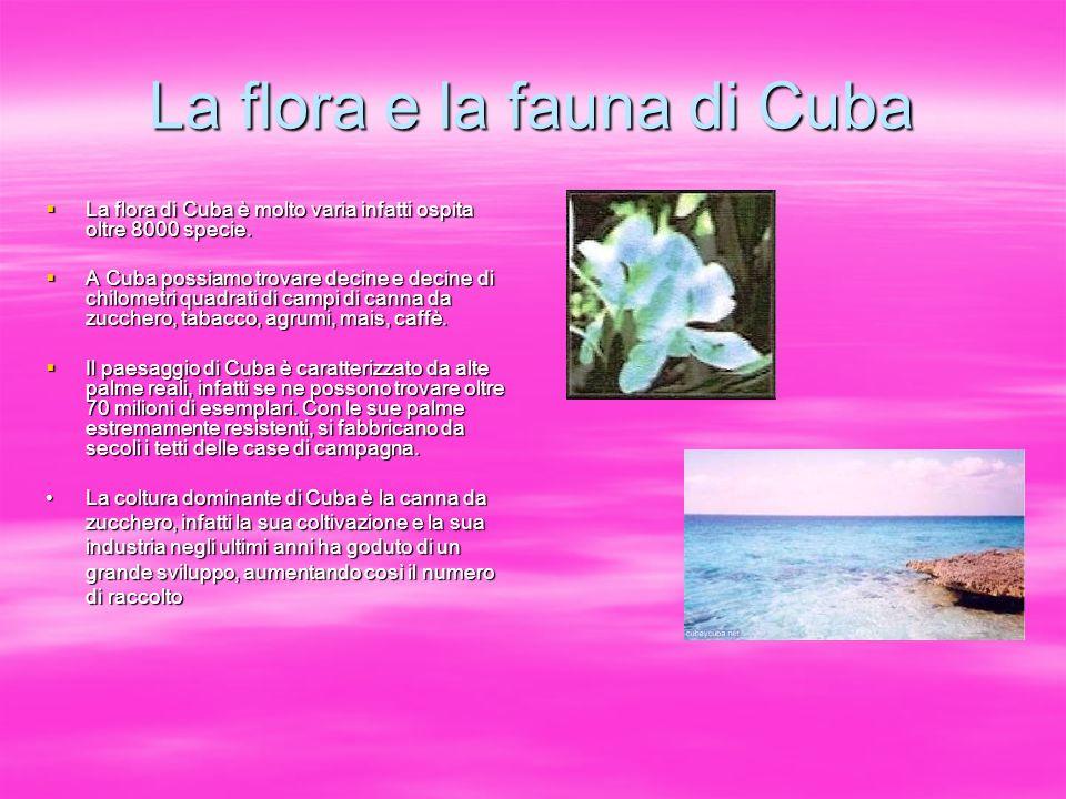 La flora e la fauna di Cuba La flora di Cuba è molto varia infatti ospita oltre 8000 specie. La flora di Cuba è molto varia infatti ospita oltre 8000