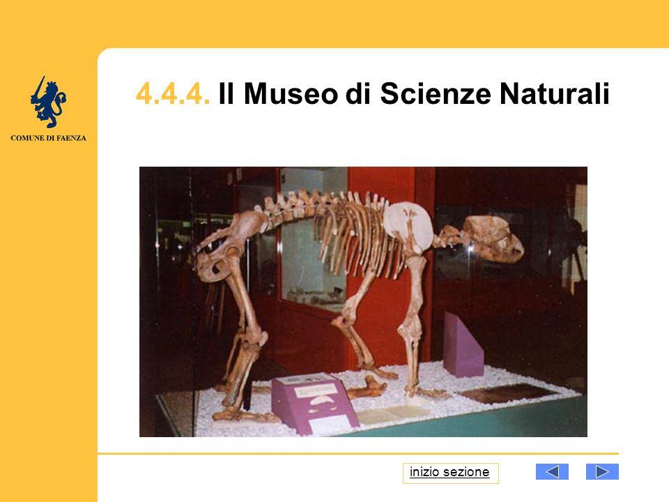 4.4.4. Il Museo di Scienze Naturali inizio sezione