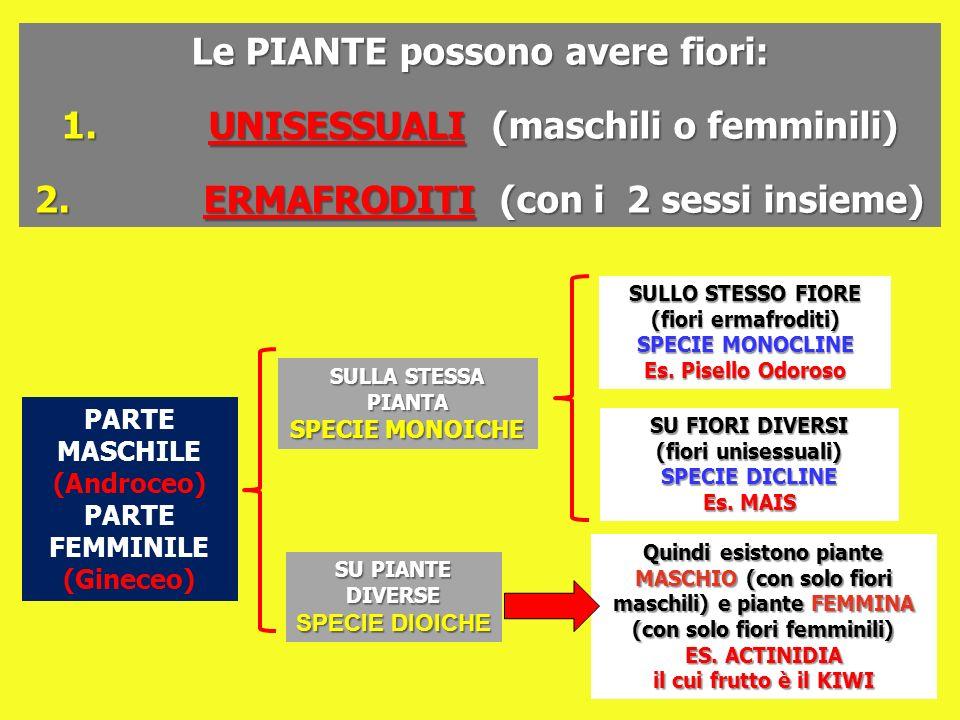 Le PIANTE possono avere fiori: 1. UNISESSUALI (maschili o femminili) 2. ERMAFRODITI (con i 2 sessi insieme) PARTE MASCHILE (Androceo) PARTE FEMMINILE