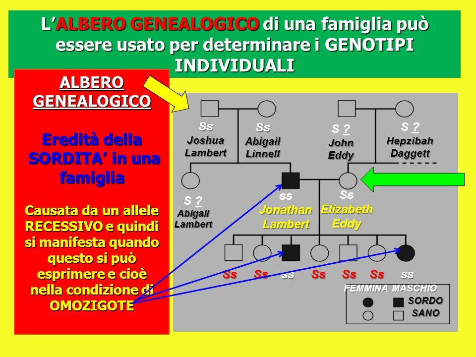 LALBERO GENEALOGICO di una famiglia può essere usato per determinare i GENOTIPI INDIVIDUALI SsJoshuaLambert SsAbigailLinnell S ?JohnEddy HepzibahDagge