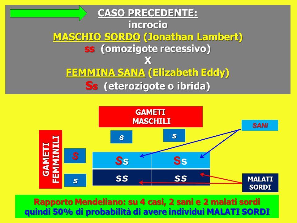 SsSsSsSsSsSs ssss CASO PRECEDENTE: incrocio MASCHIO SORDO (Jonathan Lambert) ss (omozigote recessivo) X FEMMINA SANA (Elizabeth Eddy) S s (eterozigote