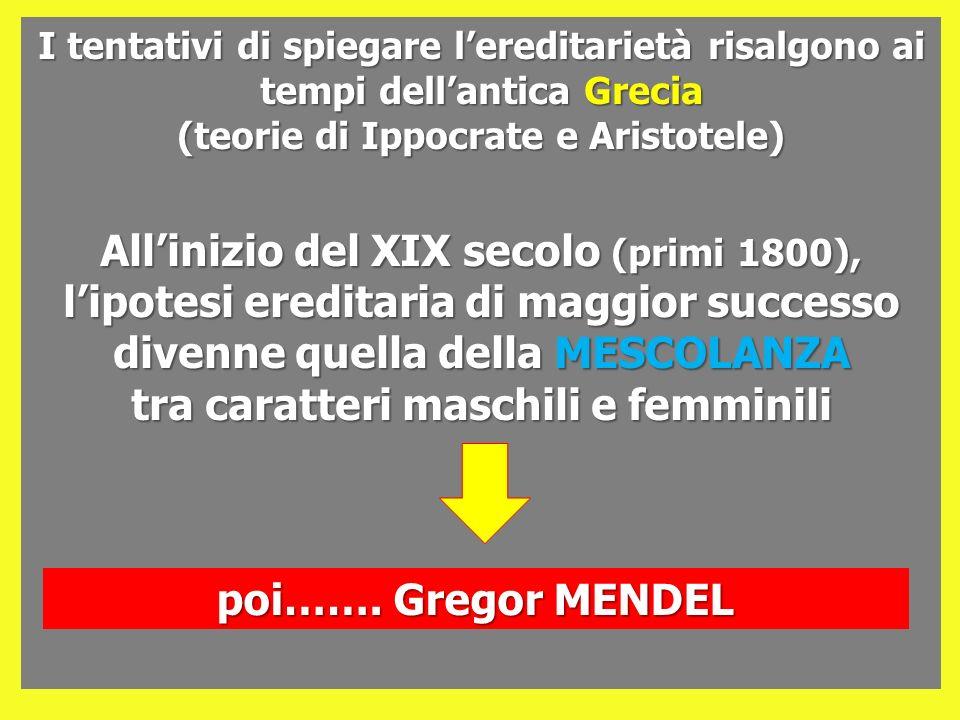 Rapporto FENOTIPICO Prole F2 mantello NERO vista NORMALE 9/16 3/16 3/16 1/16 mantello NERO cieco mantello MARRONE vista NORMALE mantello MARRONE cieco