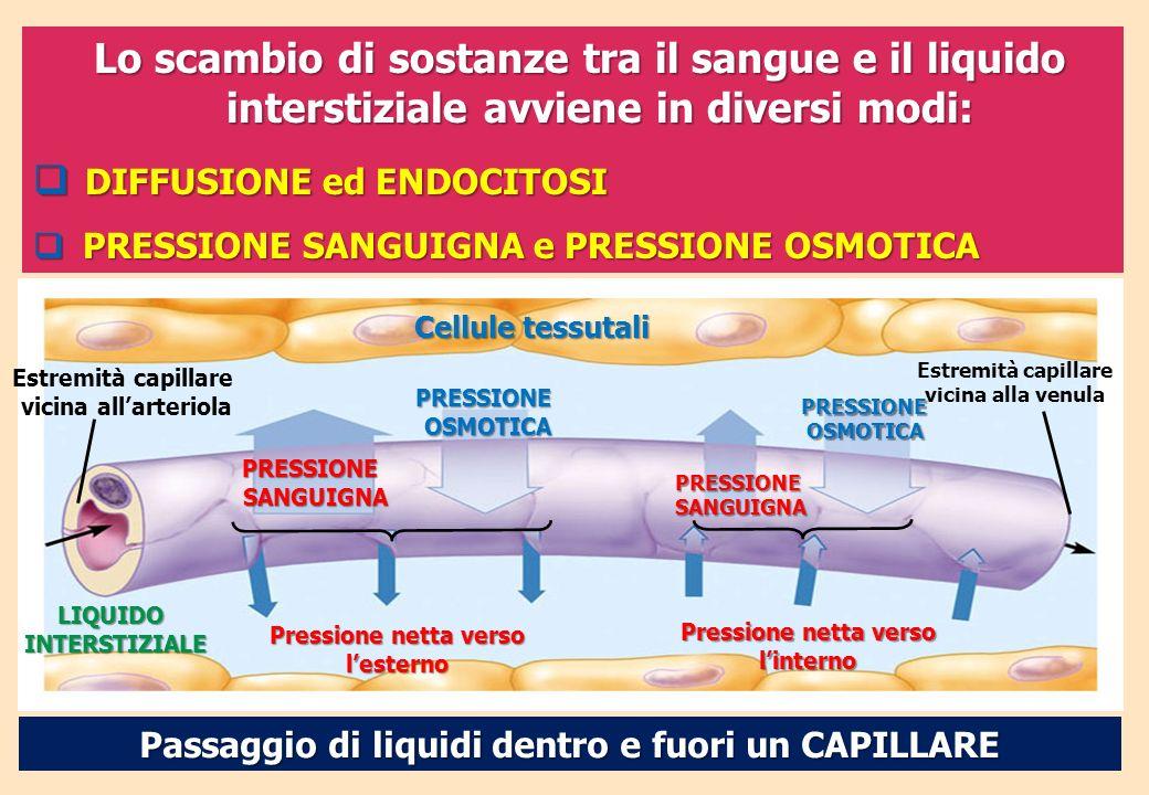 Lo scambio di sostanze tra il sangue e il liquido interstiziale avviene in diversi modi: DIFFUSIONE ed ENDOCITOSI DIFFUSIONE ed ENDOCITOSI PRESSIONE S