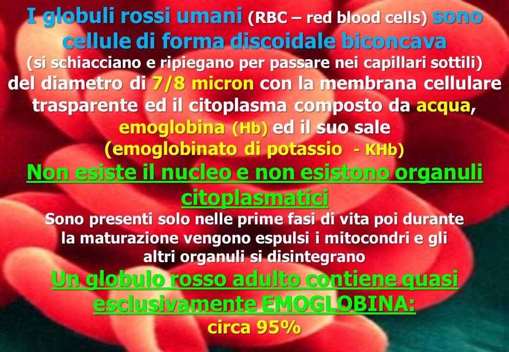 I globuli rossi umani (RBC – red blood cells) sono cellule di forma discoidale biconcava (si schiacciano e ripiegano per passare nei capillari sottili